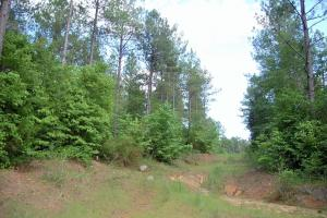 McConnells Timber Tract with Creek in York, SC (13 of 15)