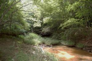 McConnells Timber Tract with Creek in York, SC (2 of 15)