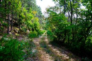 Joppa Mountain Tennessee Acreage Property in Grainger, TN (19 of 43)