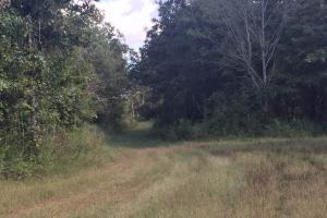Lexington Get-Away & Hunting Tract in Holmes, MS (4 of 12)