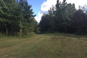 Food Plot Site (2 of 12)