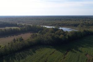 210 Highway Hunting Farm - Johnston County NC