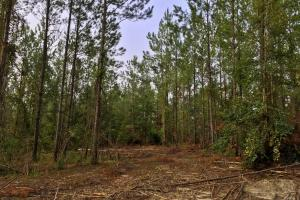 South Prong Taylors Creek Hunting and Timber Investment in Washington, AL (7 of 10)