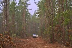 South Prong Taylors Creek Hunting and Timber Investment in Washington, AL (2 of 10)