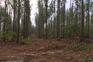South Prong Taylors Creek Hunting and Timber Investment