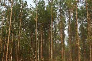 South Prong Taylors Creek Hunting and Timber Investment in Washington, AL (8 of 10)
