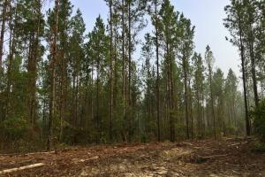 South Prong Taylors Creek Hunting and Timber Investment in Washington, AL (5 of 10)