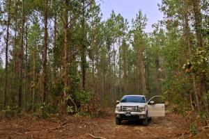 South Prong Taylors Creek Hunting and Timber Investment in Washington, AL (4 of 10)