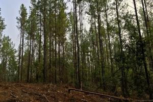 South Prong Taylors Creek Hunting and Timber Investment in Washington, AL (9 of 10)