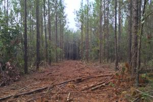South Prong Taylors Creek Hunting and Timber Investment in Washington, AL (6 of 10)