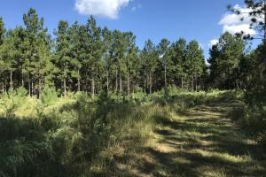 The Tibbie Timber Camp & Lake Investment in Washington, AL (15 of 47)