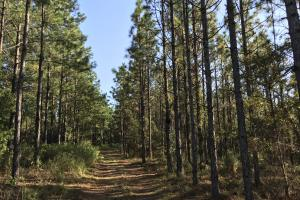 The Tibbie Timber Camp & Lake Investment in Washington, AL (43 of 47)