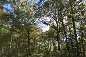 The Tibbie Timber Camp & Lake Investment in Washington, AL (11 of 47)