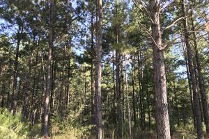 The Tibbie Timber Camp & Lake Investment in Washington, AL (38 of 47)