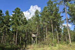 The Tibbie Timber Camp & Lake Investment in Washington, AL (29 of 47)