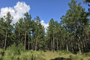 The Tibbie Timber Camp & Lake Investment in Washington, AL (28 of 47)