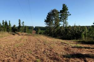 Sandwood Development Tract 6 in Lamar, MS (8 of 15)