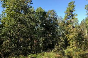 Sandwood Development Tract 6 - Lamar County MS