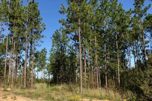 Sandwood Development Tract 6 in Lamar, MS (4 of 15)
