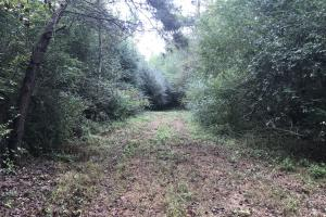 Wooded Hunting Land Near Fayetteville - Sampson County NC