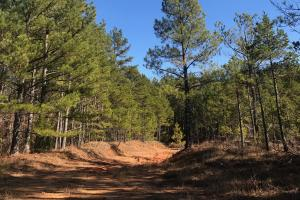 Falkner Timber and Recreational Tract - Benton County MS