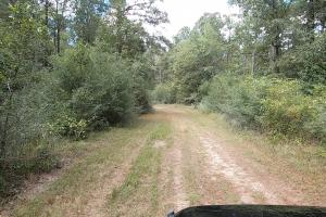 237 Recreation/Development Tract in Trinity, TX (18 of 23)