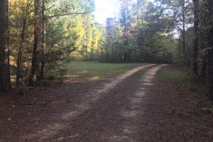 Recreational and Potential Homesite Acreage in Holly Springs - Marshall County MS