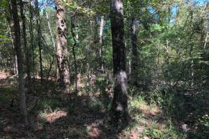 30 acres on Scotland Rd. near Winona, MS - Montgomery County MS