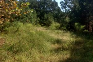 6216 Ponderosa Road/Beautiful Homesite - Harnett County NC