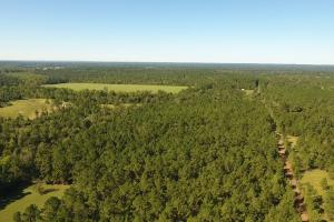 20 Acre Wooded Homesite/Ranch in Polk, TX (8 of 28)