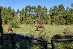 20 Acre Wooded Homesite/Ranch in Polk, TX (7 of 28)