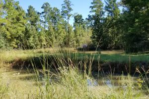 20 Acre Wooded Homesite/Ranch in Polk, TX (14 of 28)