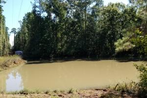 20 Acre Wooded Homesite/Ranch in Polk, TX (6 of 28)