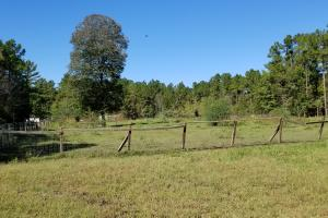 20 Acre Wooded Homesite/Ranch in Polk, TX (11 of 28)