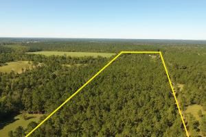 20 Acre Wooded Homesite/Ranch in Polk, TX (28 of 28)