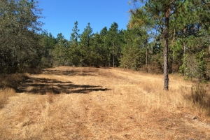 Wagener Recreational Land - Aiken County SC