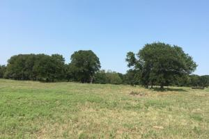 Greenwood Area Ranch Land in Wise, TX (15 of 27)