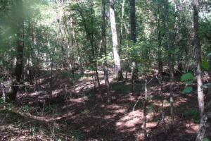 40+/- acres Timber and hunting tract