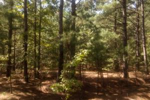 476 Hickory Dale Lane/ Perfect Homesite  - Harnett County NC