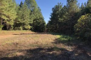 Bee Mountain Timber investment and Hunting Property