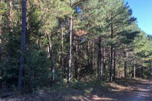 Bee Mountain Timber investment and Hunting Property in Marion, AL (6 of 10)