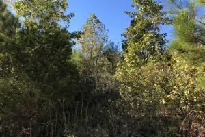 Bee Mountain Timber investment and Hunting Property in Marion, AL (9 of 10)