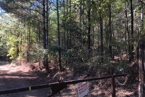 Bee Mountain Timber investment and Hunting Property in Marion, AL (5 of 10)