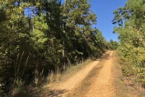Bee Mountain Timber investment and Hunting Property in Marion, AL (8 of 10)