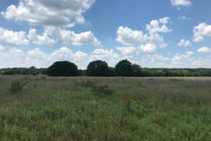 Open meadow with scattered trees 3 miles from Mabank (4 of 5)