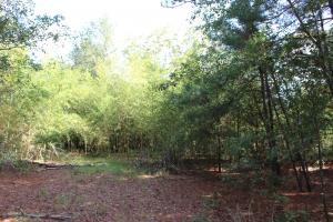 Stapleton Hunting Tract - Jefferson County GA