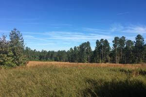 Turn-Key Hunting Land with Ponds  in Fairfield, SC (3 of 47)