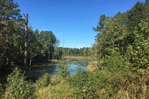 Turn-Key Hunting Land with Ponds  in Fairfield, SC (7 of 47)