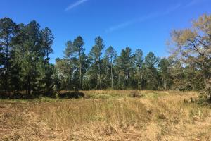 Turn-Key Hunting Land with Ponds  in Fairfield, SC (32 of 47)