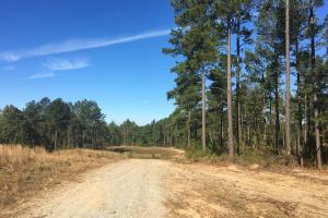 Turn-Key Hunting Land with Ponds  in Fairfield, SC (6 of 47)